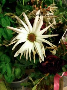 marchflowersapril4watermarked3